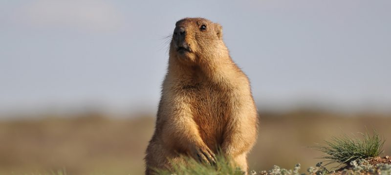 Punxutawney Phil Groundhog succession planning blog